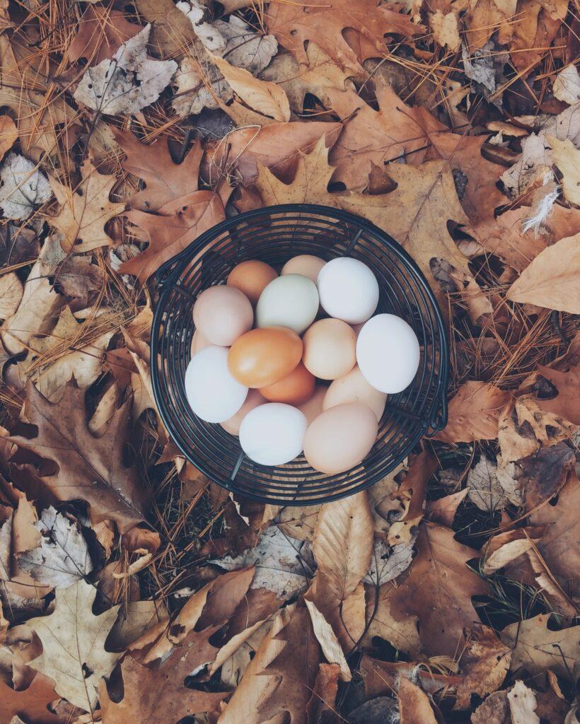 Feitjes over eitjes